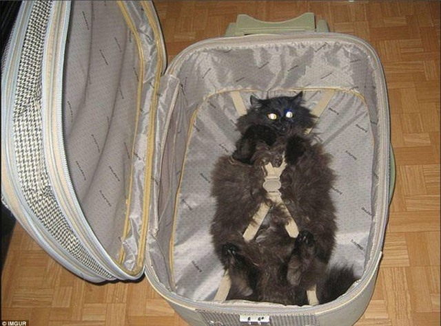 Những chiếc vali du lịch khiến ai cũng phải bật cười - 4