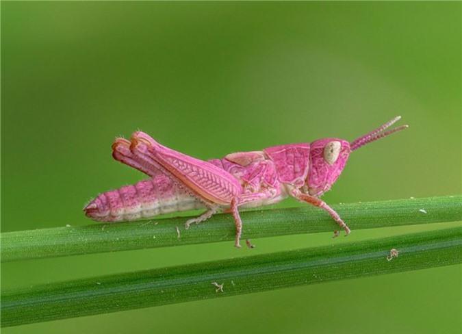 Những con vật với vẻ ngoài quái dị như thể tạo hóa làm rơi sơn khay màu khiến ai nhìn thấy cũng phải bật cười - Ảnh 1.