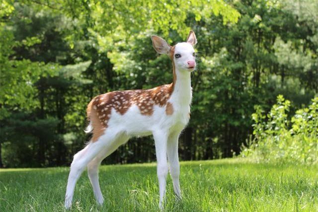 Những con vật với vẻ ngoài quái dị như thể tạo hóa làm rơi sơn khay màu khiến ai nhìn thấy cũng phải bật cười - Ảnh 2.