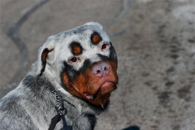 Những con vật với vẻ ngoài quái dị như thể tạo hóa làm rơi sơn khay màu khiến ai nhìn thấy cũng phải bật cười - Ảnh 3.