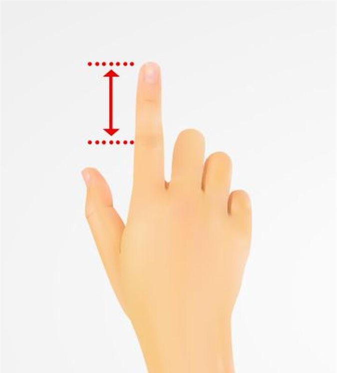 Ngón trỏ chuẩn có chiều dài các đốt bằng nhau.
