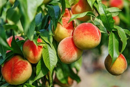 Top 10 trái cây mẹ bỉm sữa tuyệt đối không nên ăn