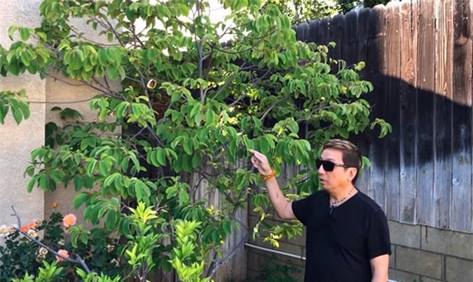 Khu vườn của ca sĩ Trường Vũ, có những cây trên 20 năm tuổi - Ảnh 2.