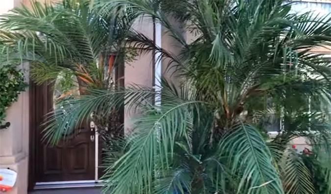 Khu vườn của ca sĩ Trường Vũ, có những cây trên 20 năm tuổi - Ảnh 4.