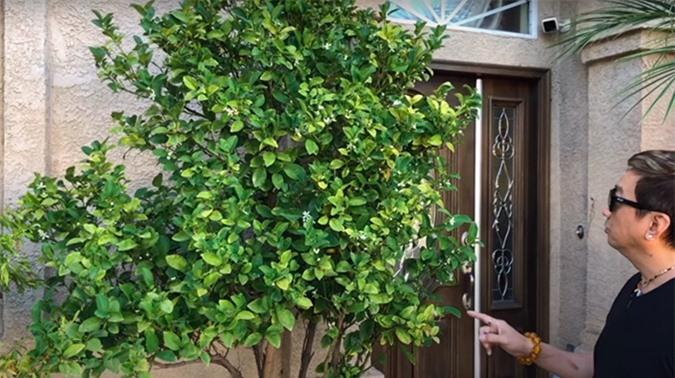 Khu vườn của ca sĩ Trường Vũ, có những cây trên 20 năm tuổi - Ảnh 5.