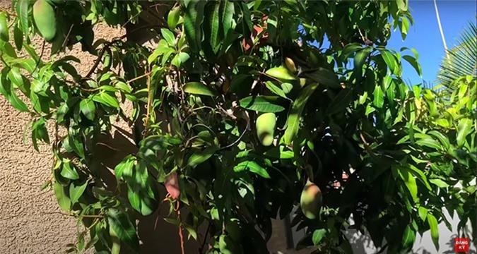 Khu vườn của ca sĩ Trường Vũ, có những cây trên 20 năm tuổi - Ảnh 6.
