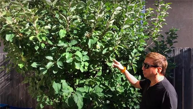 Khu vườn của ca sĩ Trường Vũ, có những cây trên 20 năm tuổi - Ảnh 8.