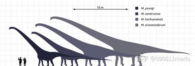 Tìm thấy dấu vết của động vật có vú trên hóa thạch của loài khủng long Mamenchisaurus - Ảnh 2.