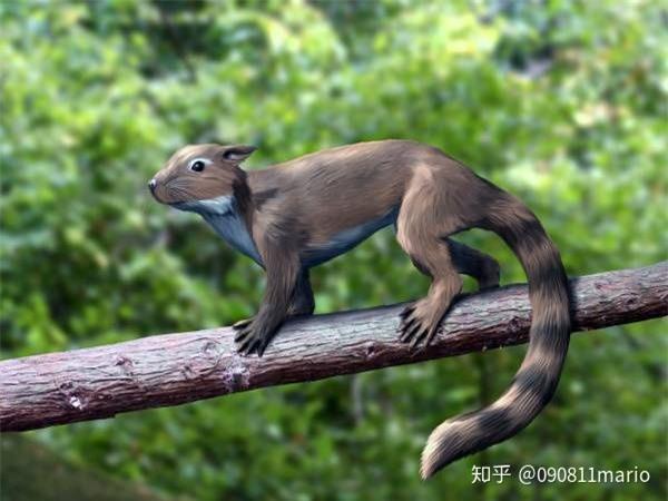 Tìm thấy dấu vết của động vật có vú trên hóa thạch của loài khủng long Mamenchisaurus - Ảnh 7.
