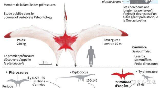 Canada phát hiện ra loài khủng long bay mới, có kích thước tương đương một chiếc máy bay nhỏ - Ảnh 7.