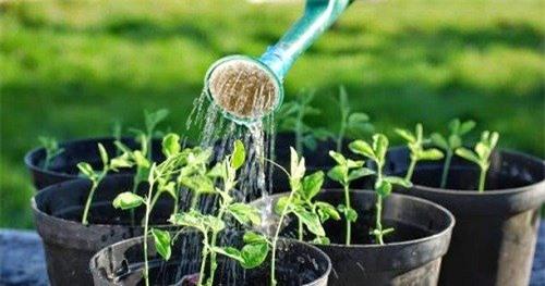 Watering-3543-1420340219