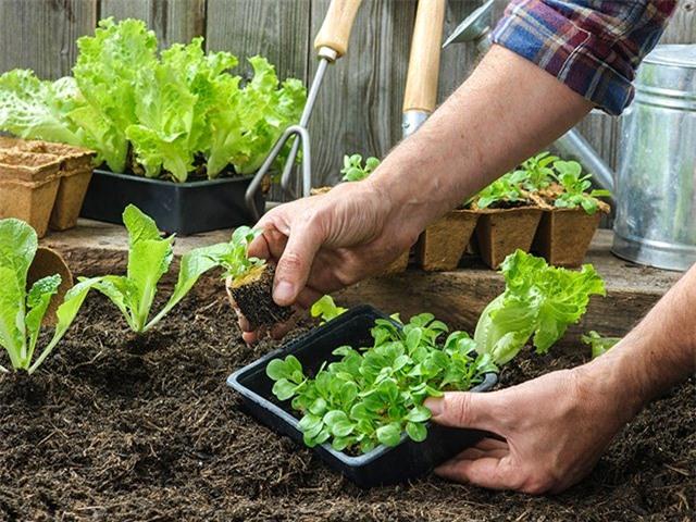 como-fazer-uma-horta-em-casa_mobile