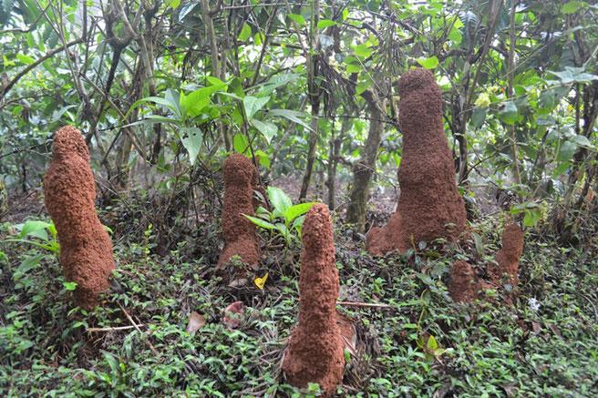 """""""Một cây làm chẳng nên non, ba cây chụm lại nên hòn núi cao"""", cùng đoàn kết, hợp lực lại với nhau thì chuyện gì cũng có thể vượt qua. Dường như loài kiến là loài côn trùng vận dụng rất tốt điều này."""