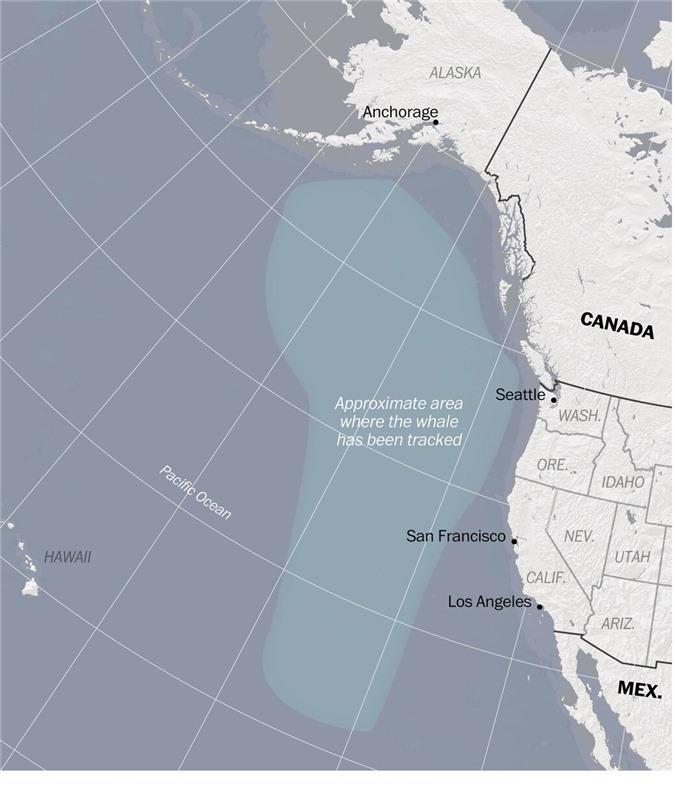 Tiếng vọng từ đại dương tăm tối: Bí ẩn kỳ lạ khiến giới khoa học không thể giải mã suốt gần 3 thập kỷ - Ảnh 4.