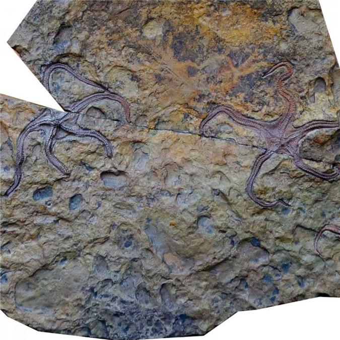 Hóa thạch sinh vật biển 275 triệu năm được phát hiện năm 2017. Ảnh: Reuters