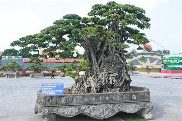 Sanh lá mũi hài ký đá cổ nhất châu Á, đại gia đổi 8 lô đất vẫn không bán - 2