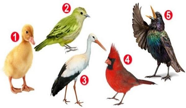 Bạn chọn con vật nào?
