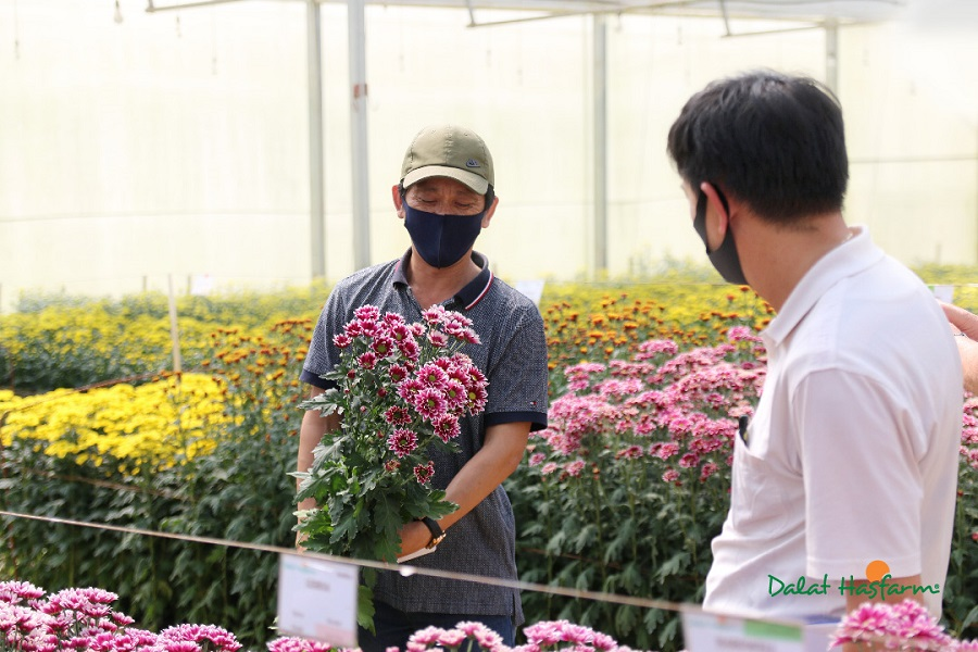 Hoa chủ đạo của Dalat Hasfarm Flower Trials 2020 là các loại hoa Cúc.