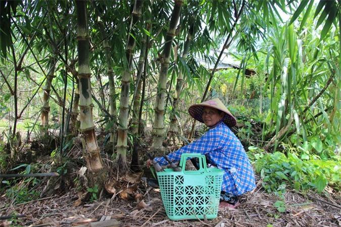 Thu lãi trăm triệu nhờ trồng loại cây bán không bỏ thứ gì - Ảnh 5.