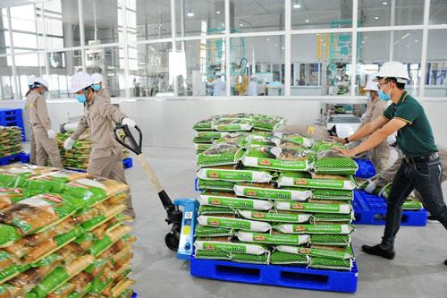 Gạo sạch chất lượng cao của một DN Việt vừa xuất khẩu vào thị trường EU.