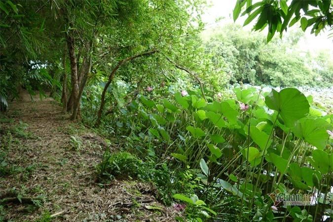 Một góc vườn xanh mát nhà cụ Tam Nguyên Yên Đổ.