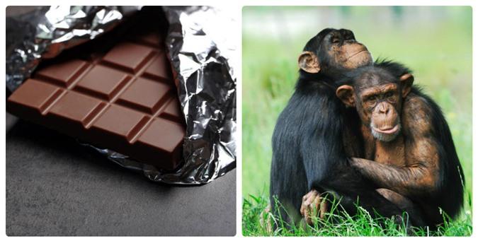 Mỳ ăn liền và kem vani có thể làm các loài động vật này tuyệt chủng - 1