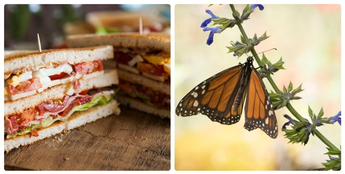 Mỳ ăn liền và kem vani có thể làm các loài động vật này tuyệt chủng - 2