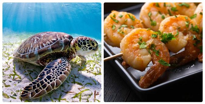 Mỳ ăn liền và kem vani có thể làm các loài động vật này tuyệt chủng - 3