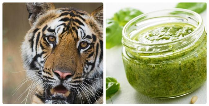 Mỳ ăn liền và kem vani có thể làm các loài động vật này tuyệt chủng - 5