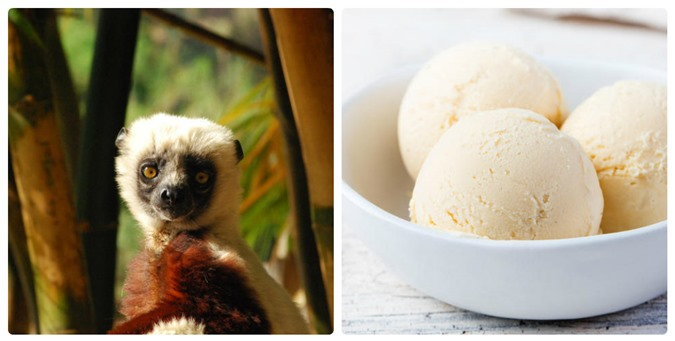 Mỳ ăn liền và kem vani có thể làm các loài động vật này tuyệt chủng - 6