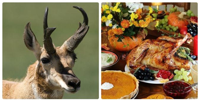 Mỳ ăn liền và kem vani có thể làm các loài động vật này tuyệt chủng - 8