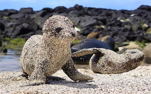 Ảnh đẹp: Sư tử biển con