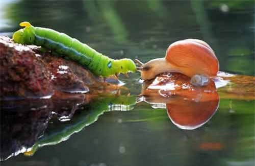 Ảnh đẹp: Ốc sên đối đầu với sâu bướm - 2