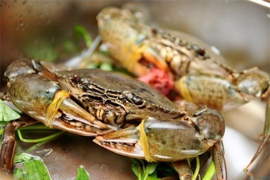 Cách chọn hải sản tươi ngon hàng chuẩn