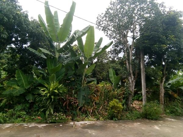 Mảnh đất tại thôn 7 xã Sam Mứn, huyện Điện Biên, tỉnh Điện Biên đang phát sinh tranh chấp quyền thừa kế, dẫn đến UBND huyện Điện Biên bị một người dân kiện ra Tòa án.