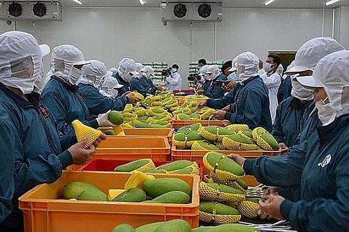 Xuất khẩu rau củ quả tháng 8/2020 tăng mạnh.