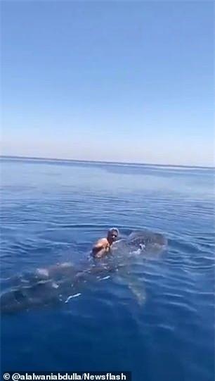 Cá mập voi hiền lành dường như không có bất cứ phản ứng gì khi người đàn ông leo lênlưng ngồi