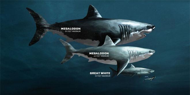 Kích thước chính xác của siêu quái vật Megalodon cuối cũng cũng được xác định - Ảnh 1.