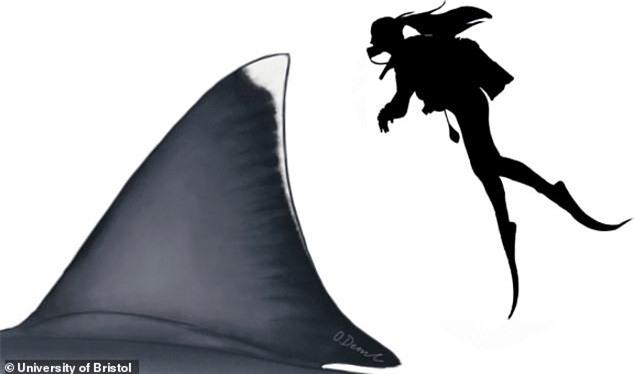 Kích thước chính xác của siêu quái vật Megalodon cuối cũng cũng được xác định - Ảnh 2.
