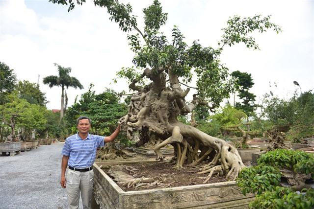Hoa mắt trước khu vườn triệu đô của ông vua cây cảnh - 11