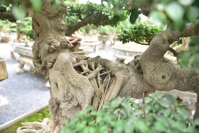 Hoa mắt trước khu vườn triệu đô của ông vua cây cảnh - 14