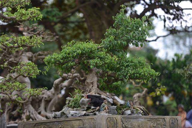 Hoa mắt trước khu vườn triệu đô của ông vua cây cảnh - 15