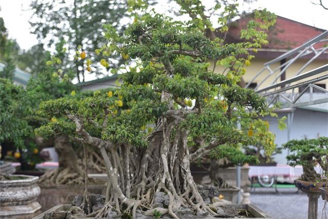 Hoa mắt trước khu vườn triệu đô của ông vua cây cảnh - 9