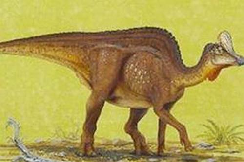 BÍ ẩn về vết hóa thạch của 3 khủng long mỏ vịt