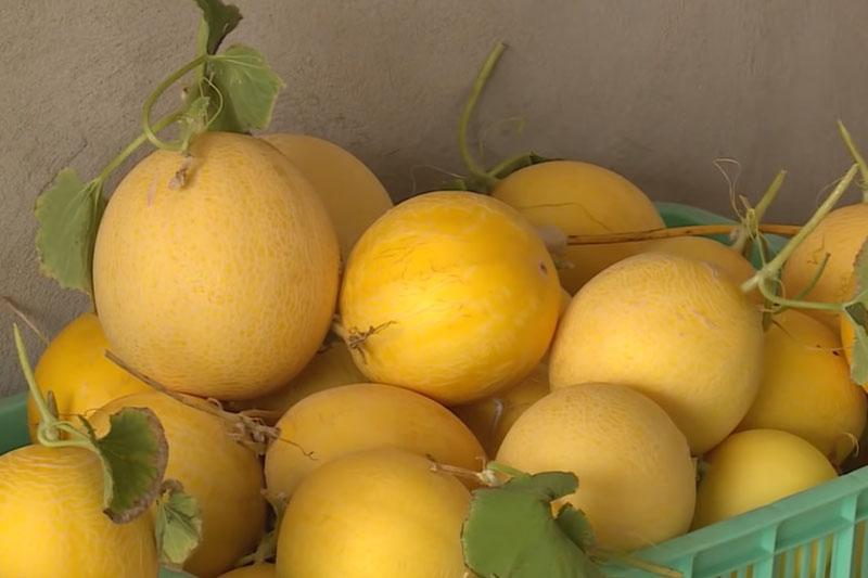 Hà Nội: Thu 14 tỷ đồng/năm nhờ trồng rau quả sạch