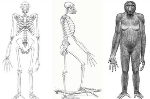Tổ tiên của loài người là sinh vật ngoài Trái Đất?