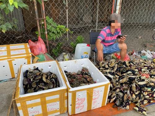 Thực hư cua Cà Mau 50.000 đồng/3 con bán đầy đường