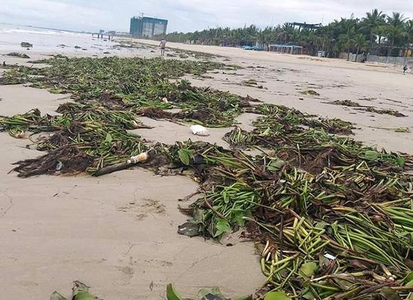Đà Nẵng kêu gọi chung tay dọn hơn 50 tấn rác trên bãi biển sau bão số 5