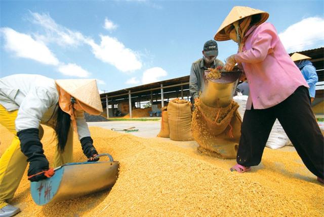 Gạo Việt tiếp tục bức tốc tiến vào EU nhờ EVFTA - Ảnh 1.
