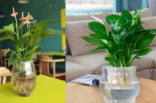 """5 loại cây """"xịn"""" như điều hòa, đặt trong nhà vừa đẹp vừa mát lại lọc sạch không khí"""